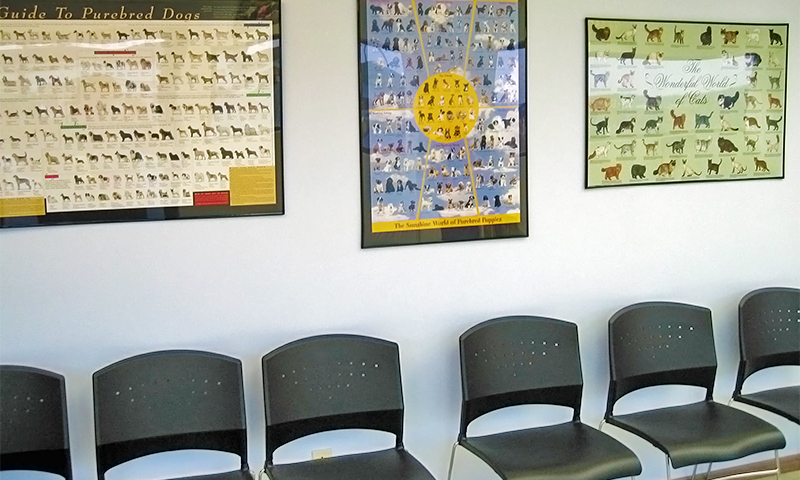 The Waiting Room at our Vet Clinic
